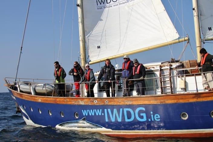IWDG Safety Statement for Inshore Boat-Based Surveys